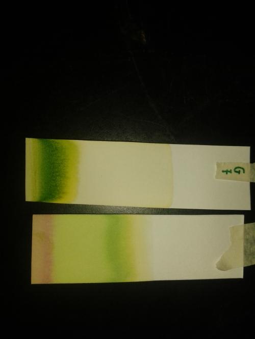 Pigmentos naturales - Separación por cromatografía